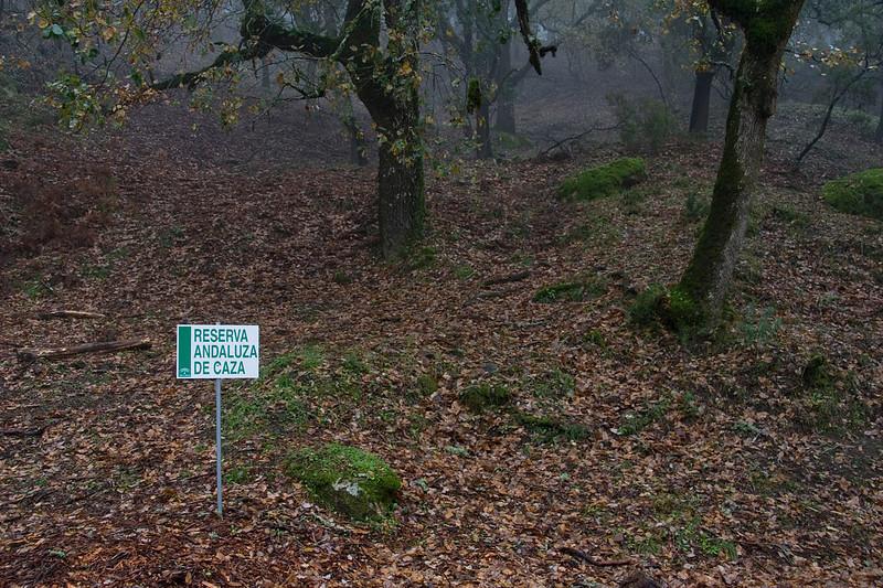 """""""Los Alcornocales"""" Natural Park, Dec 2008"""