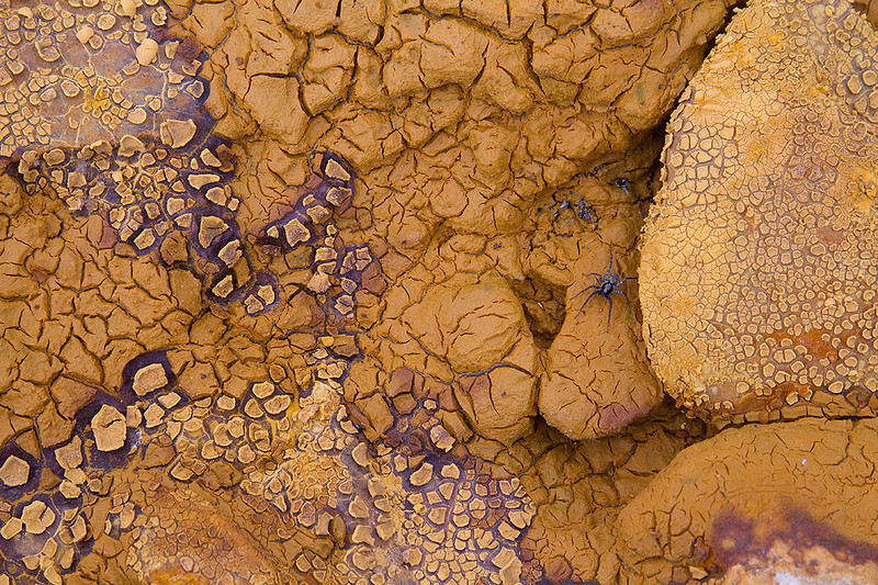 Spider on a world of ferric mud