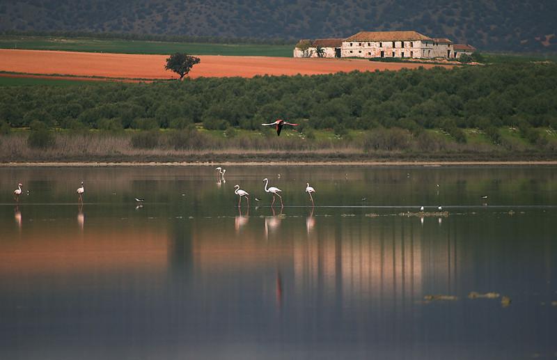 Fuente de Piedra Athalassic Saline Lake. Málaga. Spain