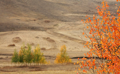 Autumn @ Anatolia