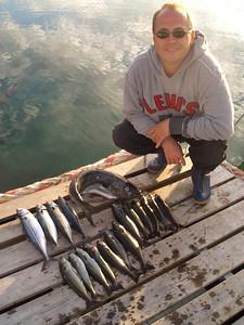 Sei, Makerel and Atlantic Codfish - Lofoten / Norway