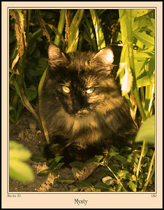 garden cat in the evening