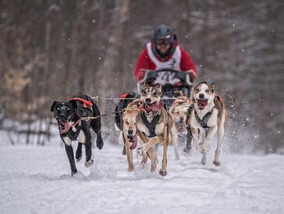 2-dogsled01