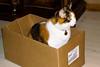 Carmel in box