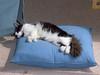 Fritz sleeping on pillow