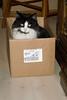 Fritz in box