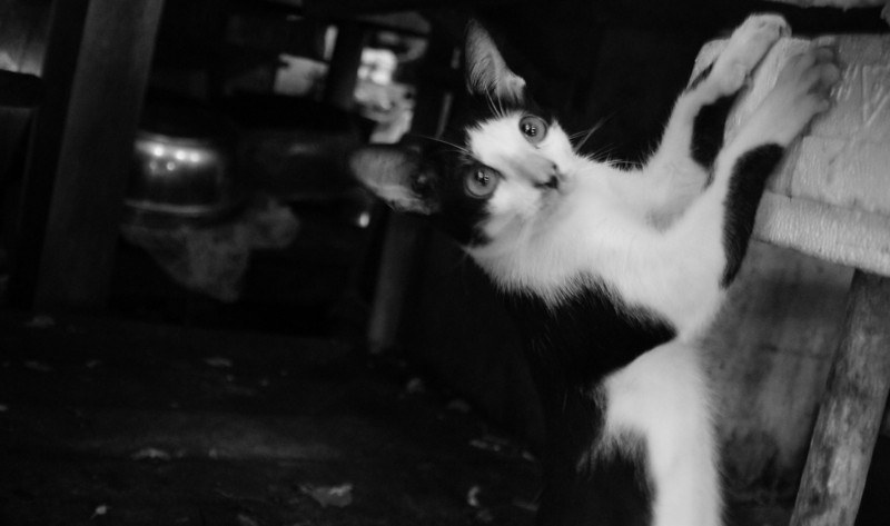 A black and white shot of the same kitty losing it's grip as it slides back down.