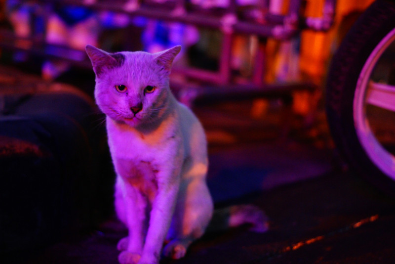 This is an example of a mangy looking feral cat on the streets of Khao San road.  You can tell from it's coat of fur and lanky frame that it just barely gets by day to day.