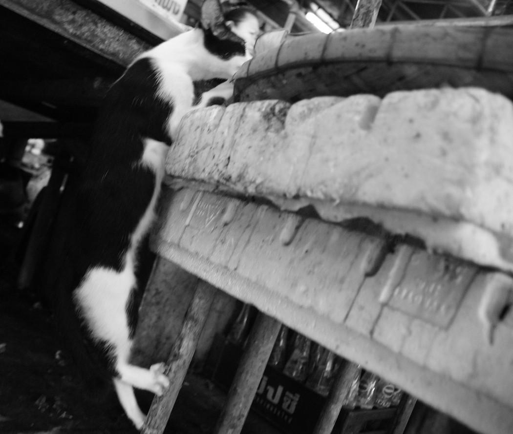 This kitty is enjoying an opportunistic moment to grab some fish while they're being left unattended by a shop owner at a local market - Bangkok, Thailand.