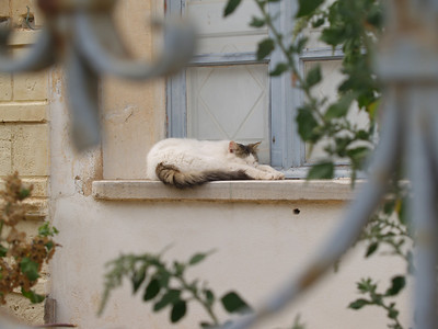 Greece. Santorini. Fira. Cat napping.