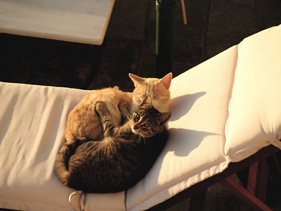 Greece. Santorini. Fira. Resident kitties wondering if I was going to ask them to move... no problem, I'll just use the other lounge chair.