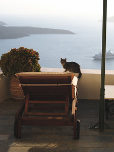 Greece. Santorini. Fira. Good morning Kitty.
