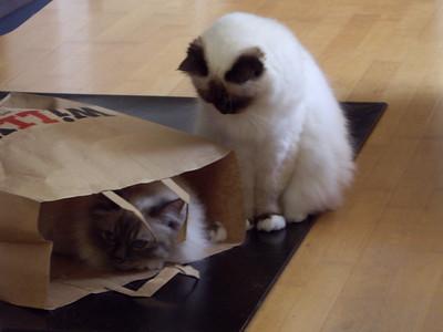 Figaro, Ozzy
