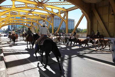 Sacto Cattle Dive Across Tower Bridge
