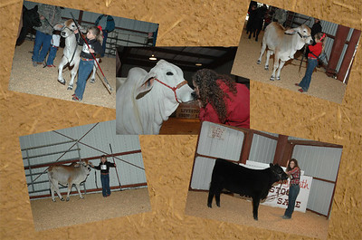SAMPLE COLLAGE PHOTO   3 to 5 photos with background   Special price for this show only!  $25.00  8x10  with 3 to 5 photos in a collage.   To OREDER a COLLAGE 8x10 you must contact Kim with your choice of photos. Kzphoto@alltel.net 386-364-1213 866-425-1221 THANKS!