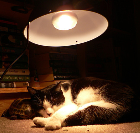 Heatlamp