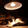Heatlamp