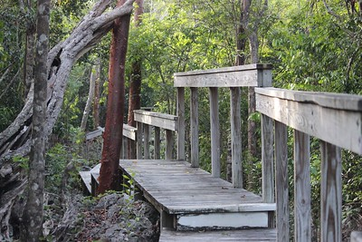 Walkway to Parrot Paradise