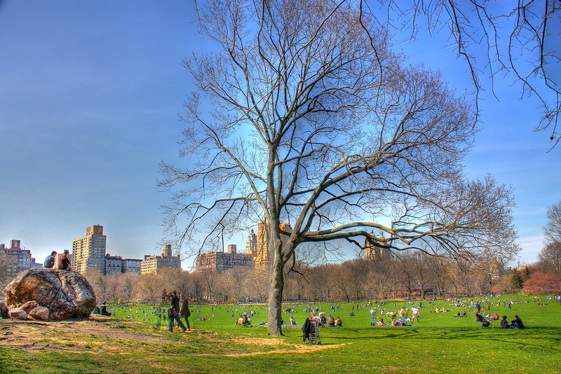 Sheep Meadow  -- click image for larger view