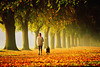 Choice 2 of 18<br /> <br /> Woman walking dog along avenue of trees in mist, autumn