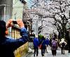 Charming and scenic scenes of Kamakura