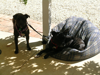 Our puppies after investigating the property ready for a nap.