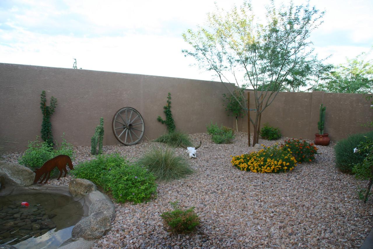 Bonnie's yard in AZ.