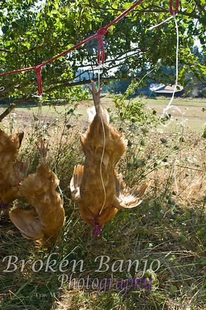 Chickenslaughterhigh_8