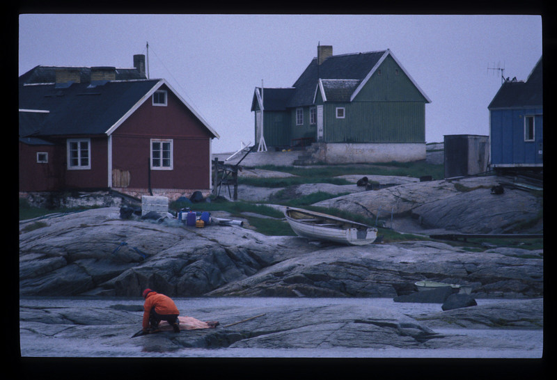 "Another boy, a ten year old, packed the steaks in black plastic. He left spine, whiskers and feet, and the sea gradually came up and reclaimed them from the rock while we had lunch.<br /> <br /> 	Greenlanders enjoy a dollop of Caribou blubber (from the lower back is best) in their black coffee, Willy said. I just had a mosquito floating in mine.<br /> <br /> 	In the end, the touring Germans opted for a hostel in Ilullisat over a hut in Rodebay, and so about four we sailed away, skirting the shore because it was deeper there, until icebergs blocked the way. <br /> <br /> 	Willy peered into the radar and he exclaimed, ""Aye, there's rocks fifty centimeters below the keel!"" We skirted them ever so slowly and the rain ended, and we sailed on past Ilullisat back into the mouth of the glacier.<br /> <br /> 	Fantastic blue veins ran the whole way through some icebergs. Willy explained: These occur when the ages-old ice cracks and water rushes in to fill the cracks. The white bergs are full of air - not dense, and the water, much denser, freezes blue. The white of the bergs is in large part due to the air trapped between snowflakes that fell thousands of years ago. <br /> <br /> 	We had a go around the mouth of the glacier. Willy pointed out the pointy-topped bergs as the most dangerous. They haven't fallen over yet, their center of gravity is high, they're more unstable. <br /> <br /> 	He told a gripping story about how he'd been hired some years back on this very spot to put in divers who would push around a ""periscope"" for a helicopter to film as the closing scene in a German movie. <br /> <br /> 	He took his place and was set to put out the divers when the helicopter, inexplicably, barreled overhead and crashed upside down into the water not thirty meters in front of his boat. The divers rescued the pilot and pulled him onto the Maya, and ""a handful of brains"" of the cameraman, who, it seems, had caused the crash by hitting some forbidden switches with his foot. <br /> <br /> 	In the height of rescue, Willy didn't think to try to videotape it, but once he did sell a tape of a disaster at Umummaq, to Real TV, for $1500, and he's sure he could've gotten more. An iceberg broke apart near Umummaq harbor and a dozen or more boats were swamped, though nobody, miraculously, was hurt. I thought back to Silva grabbing his video camera and cursing every time an iceberg split, always getting into place too late.<br /> <br /> 	Now Willy stopped to drift as near to a berg as he dared, and went aft to dip a bucket into the water until he retrieved a bobbing basketball of ice that he picked into pieces. <br /> <br /> We all shared martinis poured over glacial ice that popped and snapped as the relative heat of Willy's boat freed oxygen as old as man. <br /> <br /> 	""Zum Wohl!""<br /> <br /> 	Three hundred thousand year old air popping in our glasses - it was the sound of Greenland.<br /> <br /> *****"