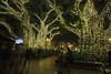 Chima Tree :