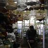 The Bird Market.