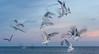 Seagulls, Florida