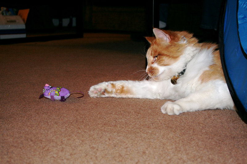 Kitty reaching out for his catnip mouse