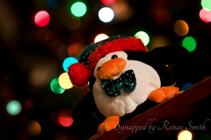 Topsy-Turvey Christmas