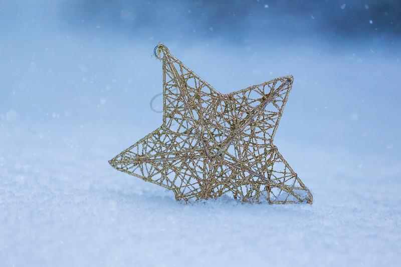 Star of Winter