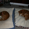 "trying out the ""new"" bed....but we were not suppose to ""catch"" this photo... they pretend they don't like the new bed.."