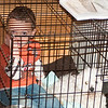 Cade was really quiet and we found him in Dad and Julie's room...inside the kennel with Louie