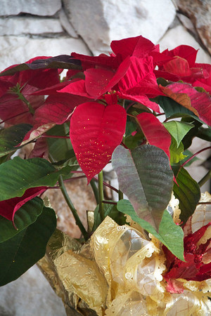 Christmas Day 2010