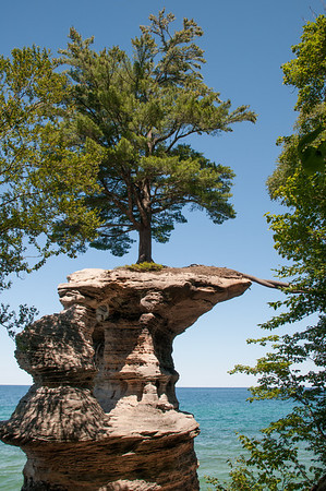 Resiliency! Pictured Rock National Seashore, Michigan.