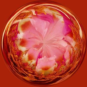 Moss Rose circle