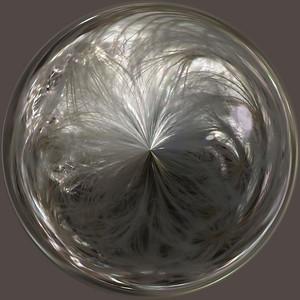 dandelion circle