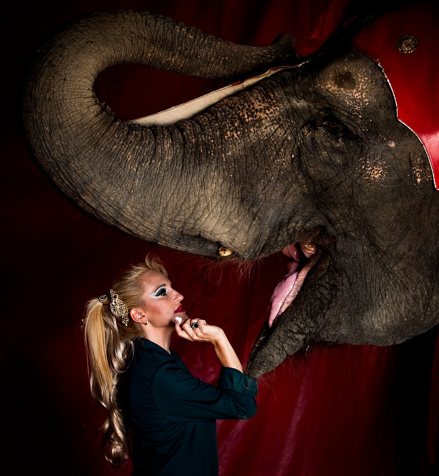 Backstage after the performance Esmeralda rewards one of the elephants with a lump of sugar. It is welcomed by a wide open mouth.