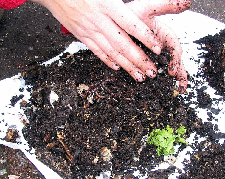 Remove worms from compost. Place worms in fresh bedding and start again.