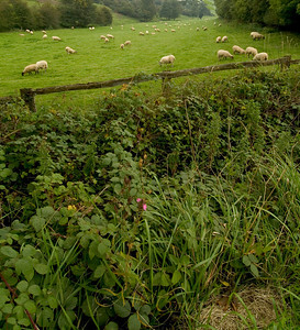 Sheeps Meadow