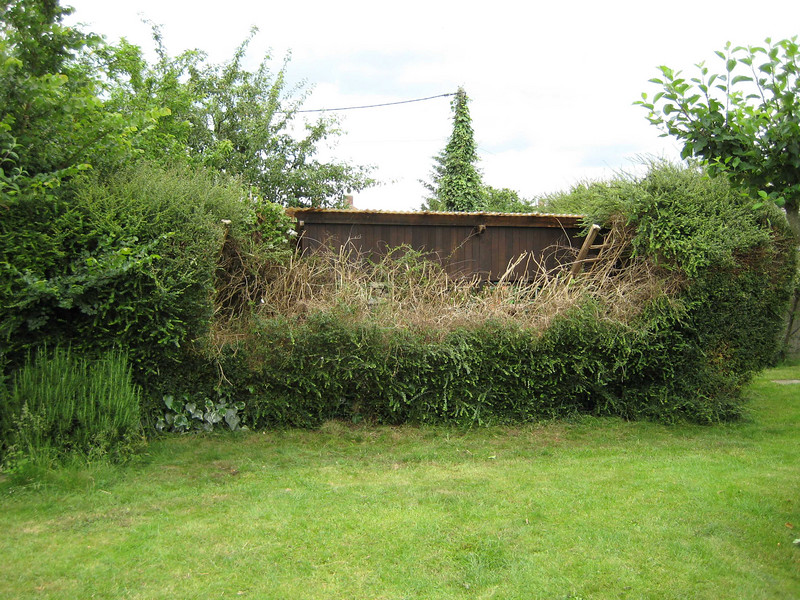 Back hedge after cutting it back. Still needs more work, but the the main collapsed area has now been cleared away.