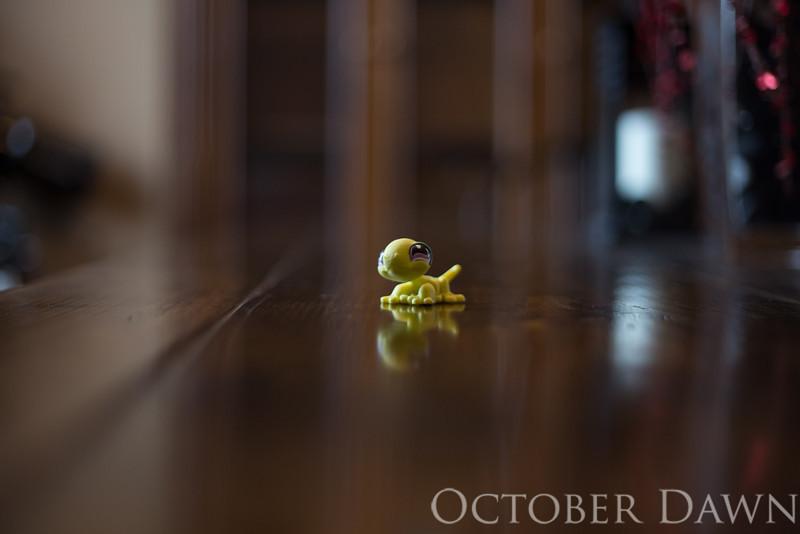 odphoto-5599