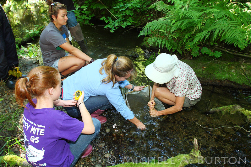 macroinvertebrate  Monitoring - Ellis Creek