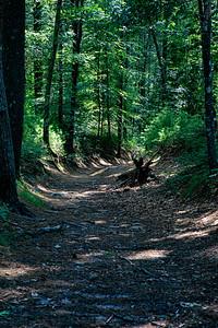 Promo Woods-3411
