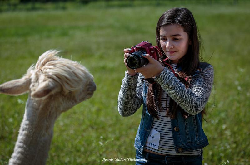 Alpaca Farm_023