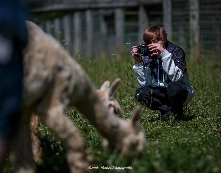 Alpaca Farm_011